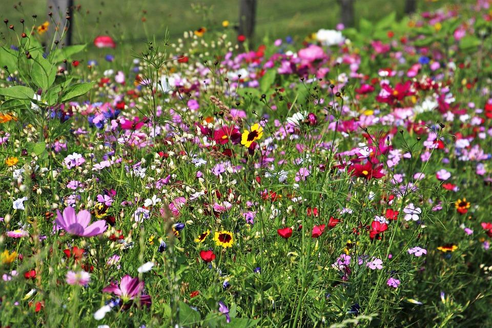 wilde bloemen weide plant - gratis foto op pixabay