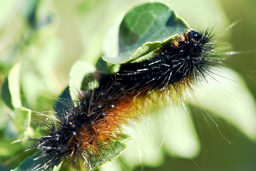 Garden Pests: The way to Eliminate Slugs And Snails Within the Backyard