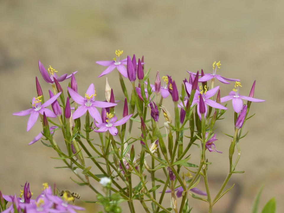 Flores Silvestres Ramo De Foto Gratuita No Pixabay