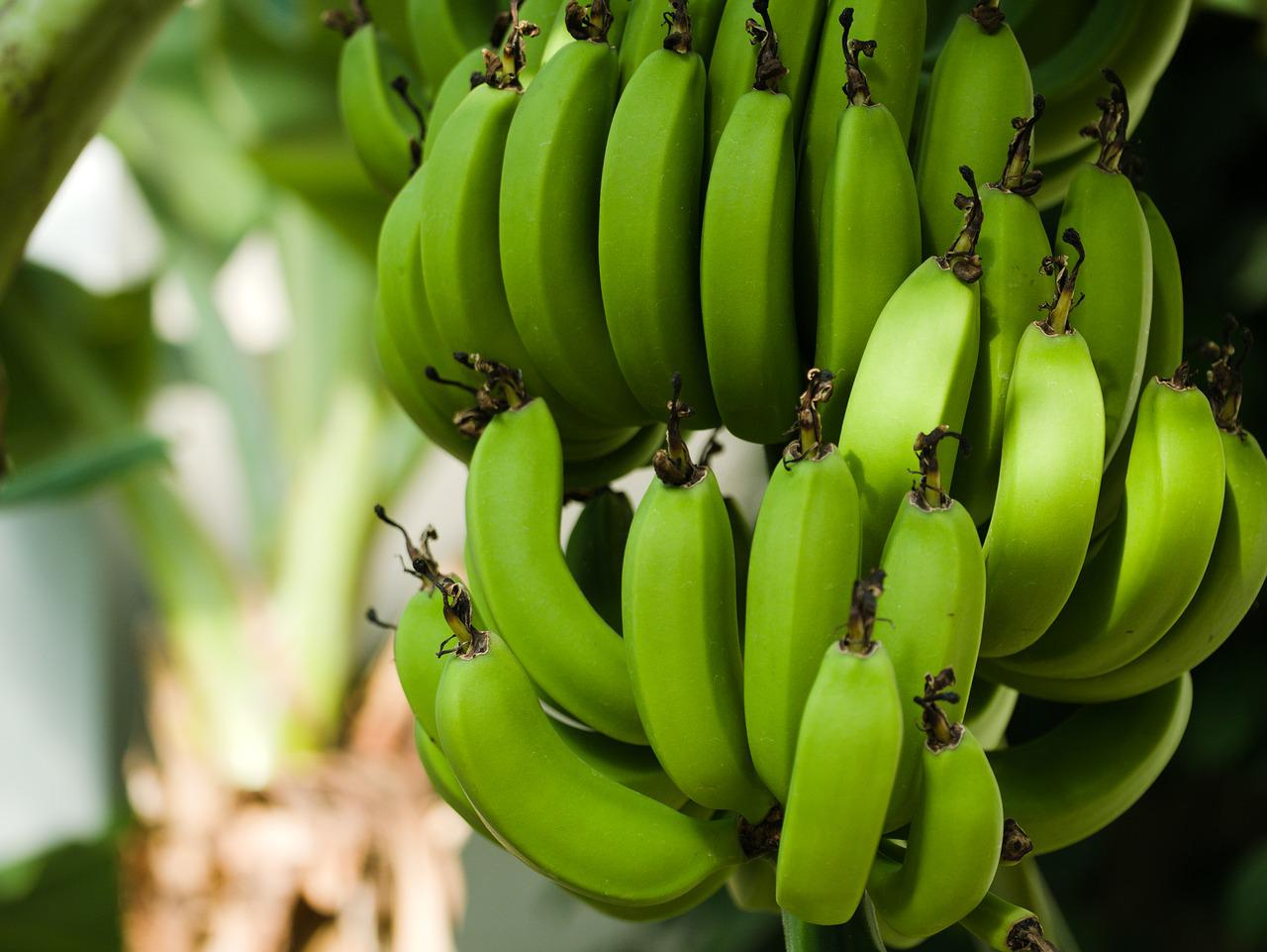 всего посадить картинка дерево бананы родину после учебы