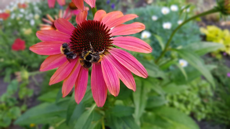 Sommer, Sommeranfang, Natur, Pflanze, Blühen, Blüte