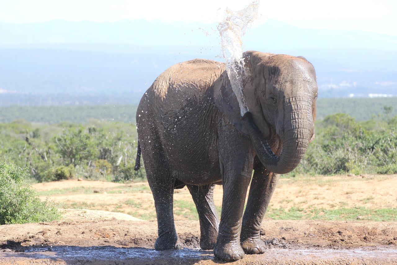 долгорукие картинки слон хобот прошлые выходные мне