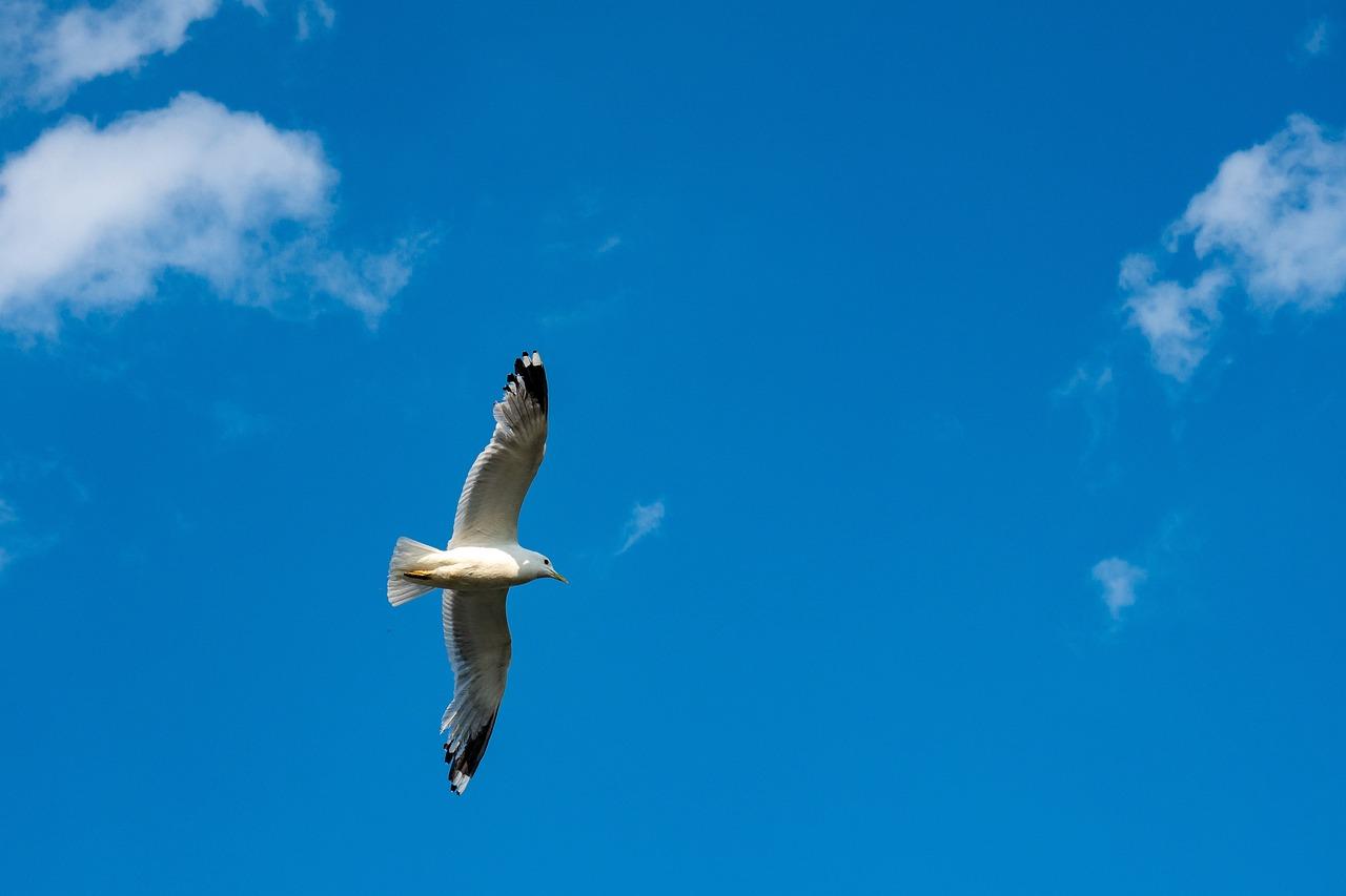 картинки летать в небе как птицы игра очень