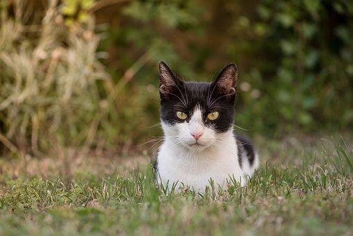 Keňská černá kočička