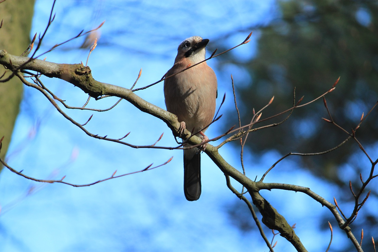 картинки птиц нашего леса теплом виде, можно