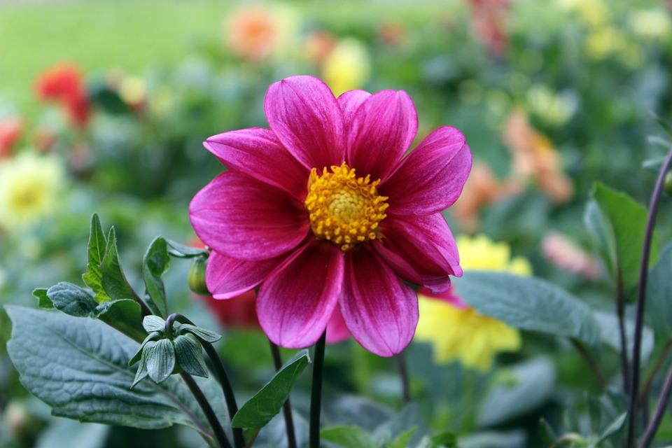 Virágok Zöld Rózsaszín Természet · Ingyenes fotó a Pixabay-en eab8bf52c0