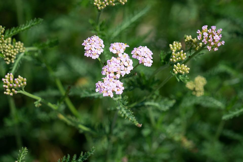 Plant flowers pink small free photo on pixabay plant flowers pink flowers small flowers nature mightylinksfo