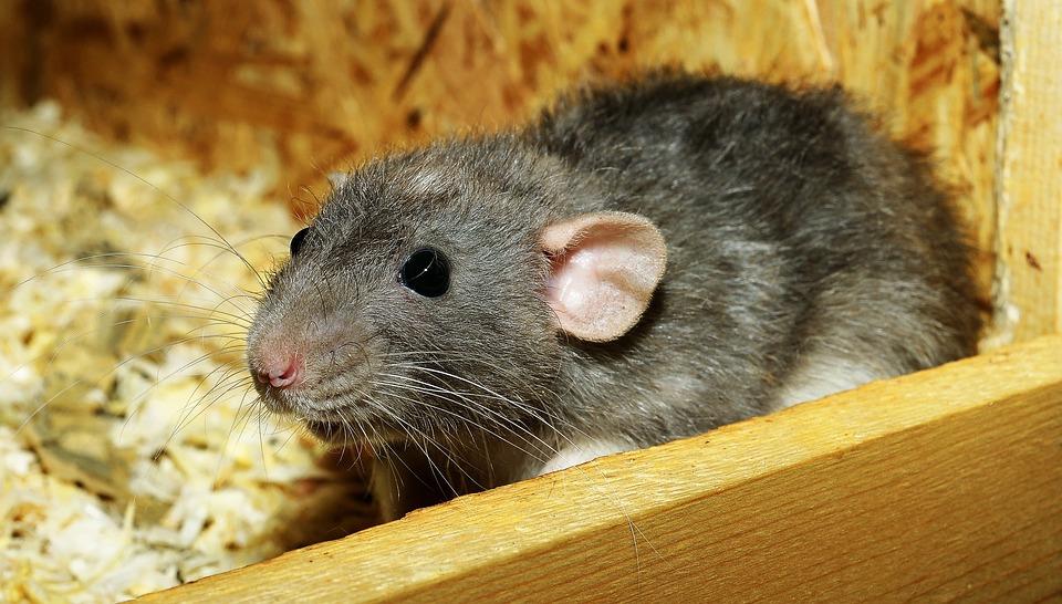 odpuzovač krys