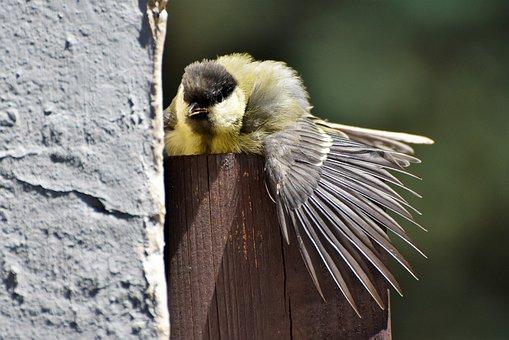 Μικρά βυζιά μεγάλο πουλί