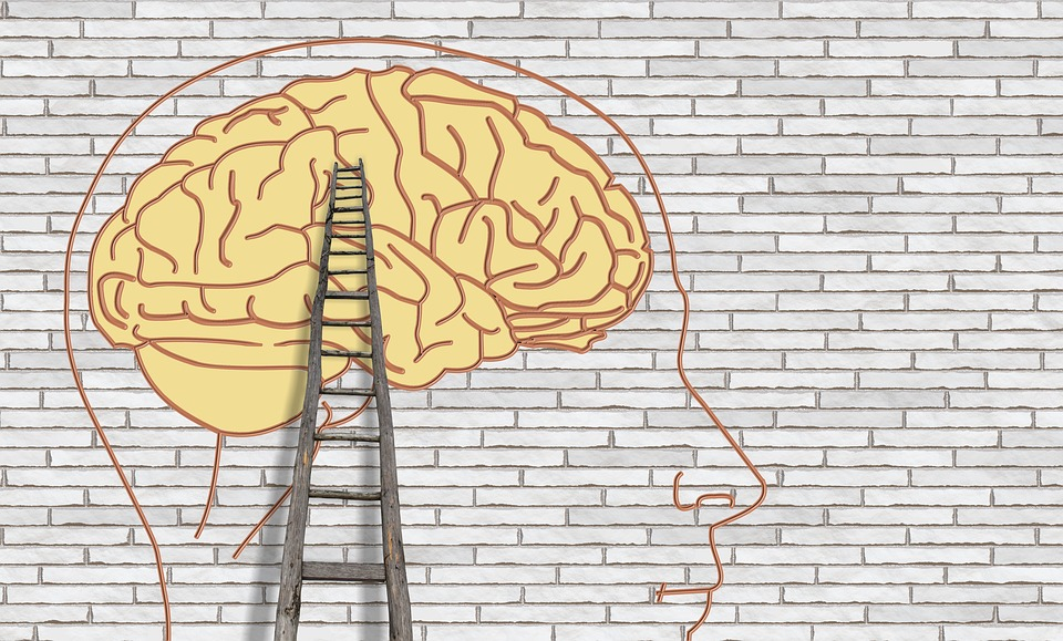 Brain Psychology Think Free Image On Pixabay