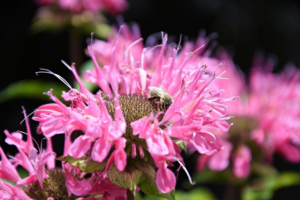 Pink flower garden free photo on pixabay pink flower garden macro spring petals bloom mightylinksfo
