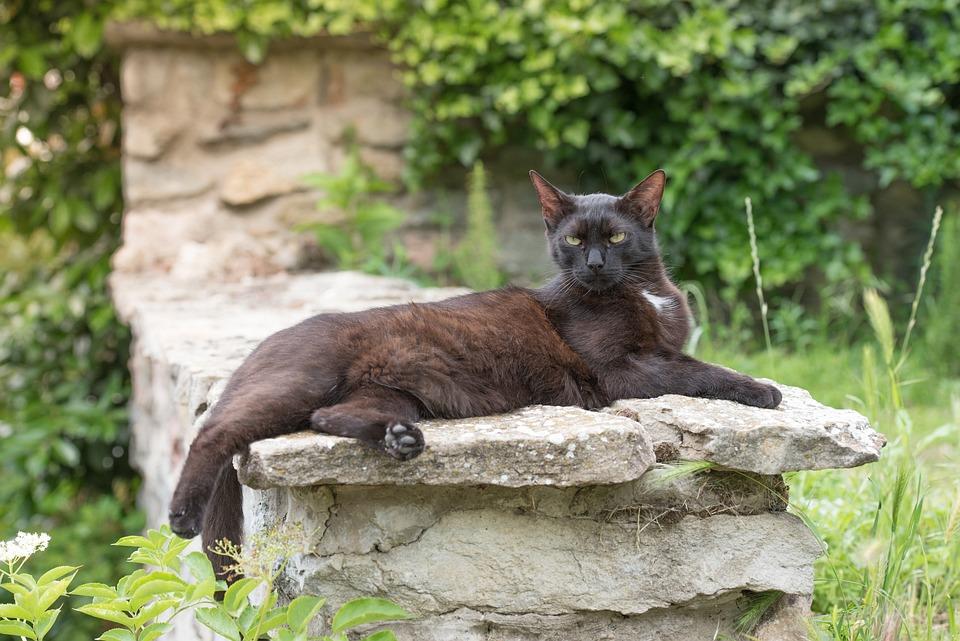 Obrovské černé kočička rty fotky