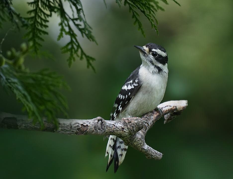 картинки про лесных птиц