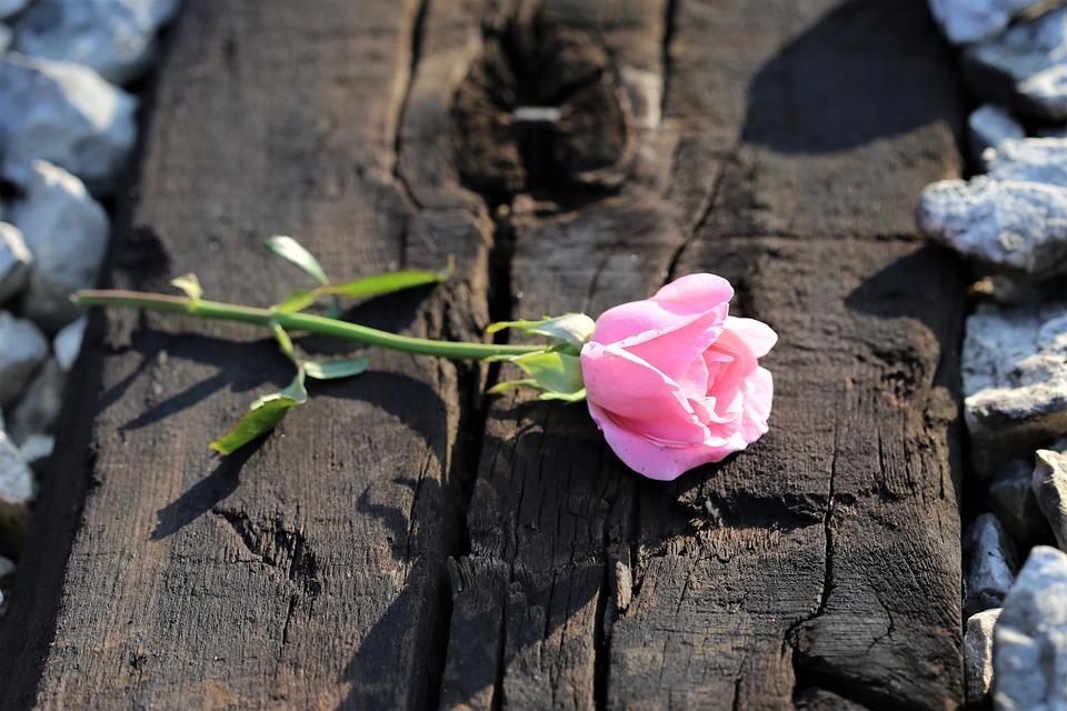 Roze Roos Op Spoor, Stop Jongeren Zelfmoord