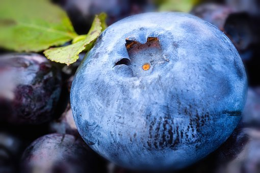 Blueberry, Nature, Berry, Blue, Ripe