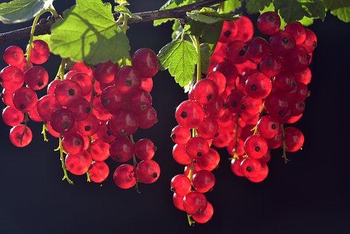 Johannisbeeren, Rot, Obst, Früchte