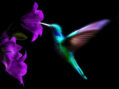 Hummingbird, Bird, Colorful, Ave, Flight