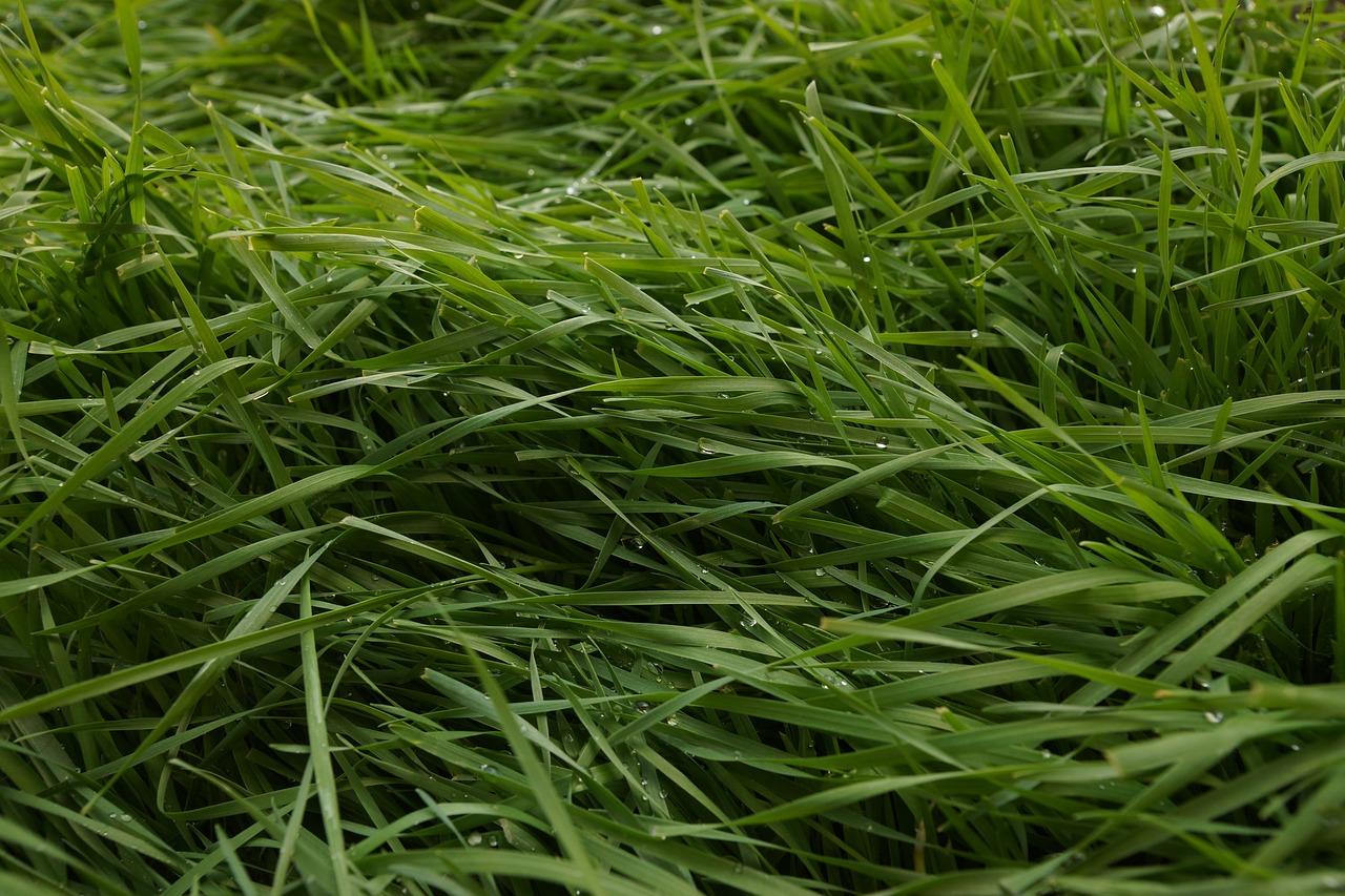 трава скошена картинка просом, она