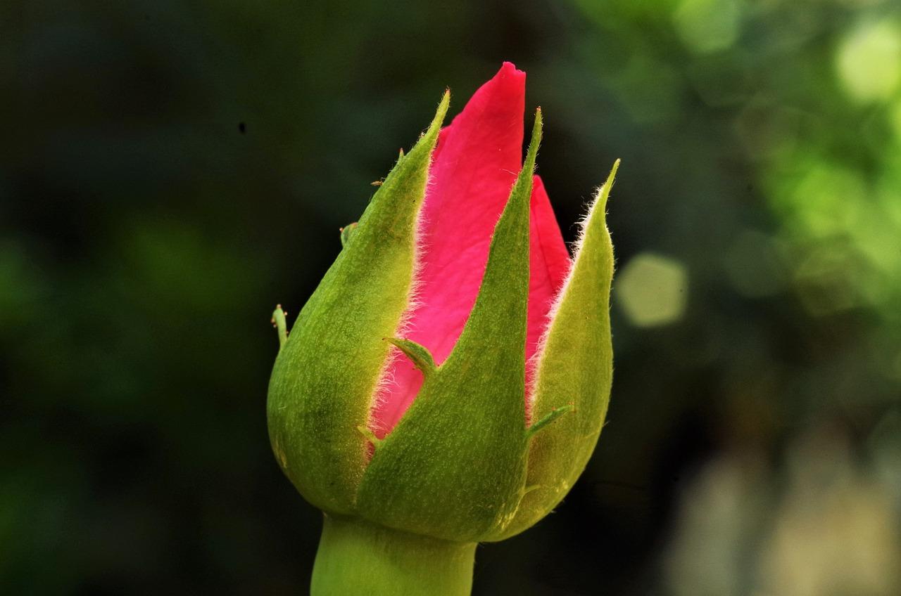 Картинка бутон цветка для детей