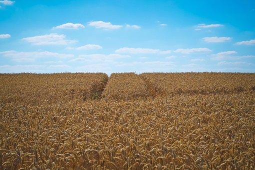 Опыт Кубани по сохранению плодородия сельхозземель будут распространять по всей России