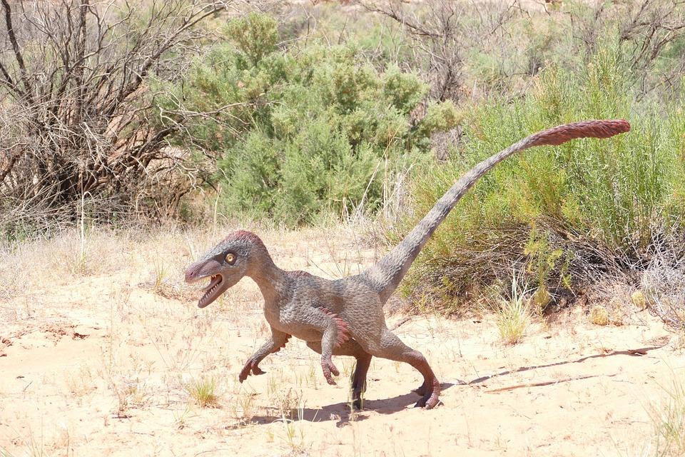 Dinosaruio-desplazamiento-bipedo-velociraptor