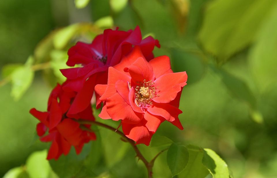 Flowers Garden Plant · Free photo on Pixabay
