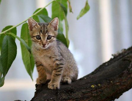 Katze, Klein, Tiere, Katzen