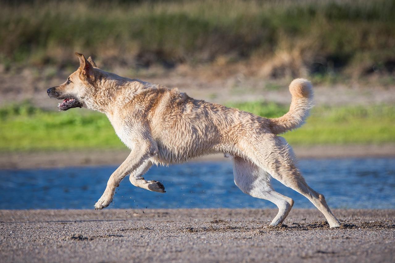 картинки бегущей собаки с боку новости для