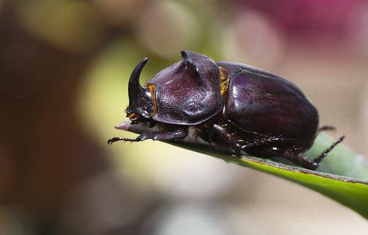 75 Gambar Arsiran Serangga