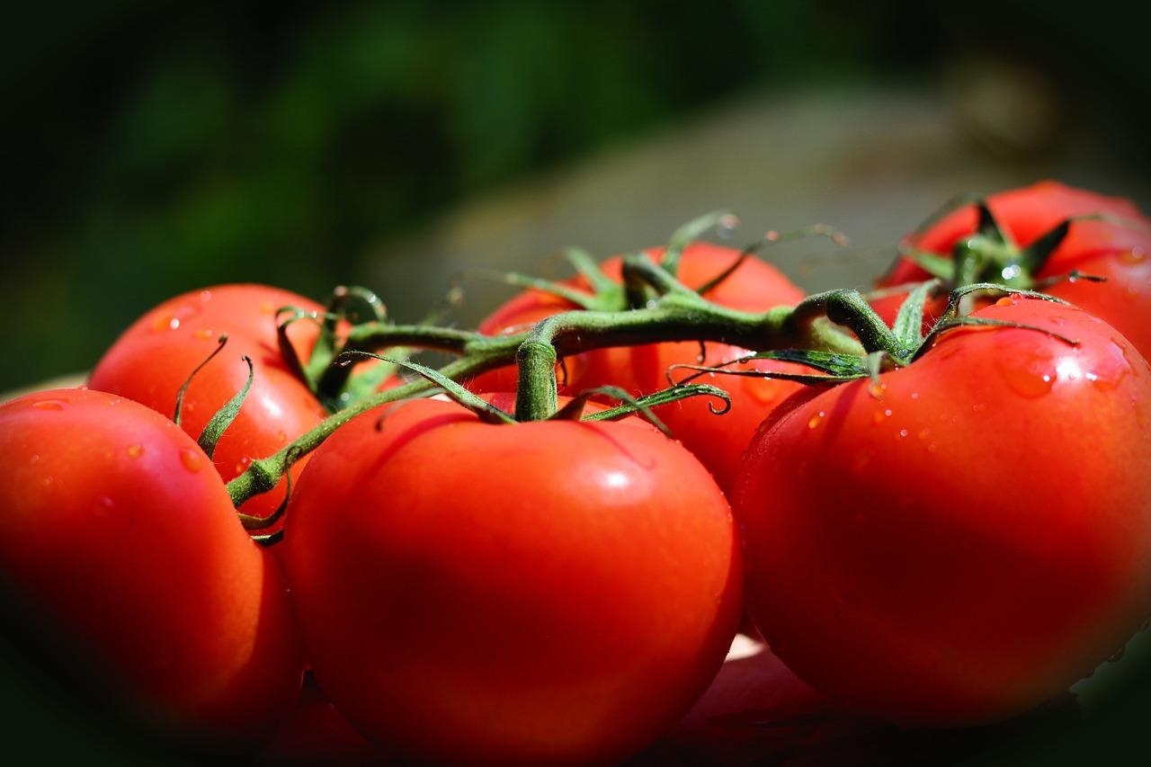 помидоры на ветке имеют проблем