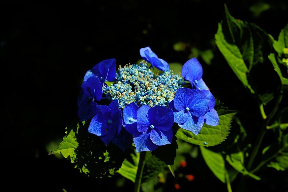Fleurs Jardin Bleu - Photo gratuite sur Pixabay