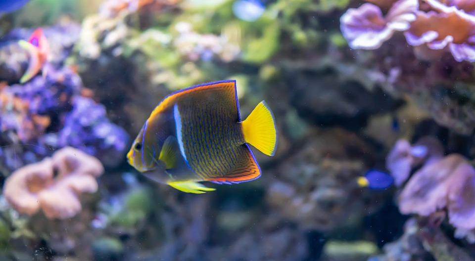 Tropical Fish Underwater Exotic Aquatic Nature