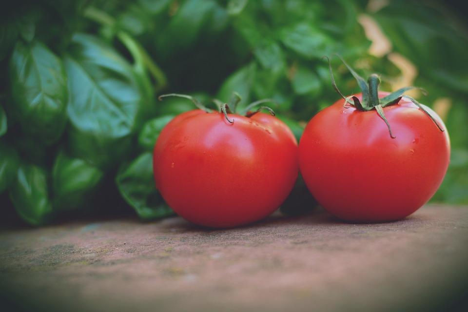 Tomatoes, Trusses, Bush Tomatoes, Basil, Vegetarian