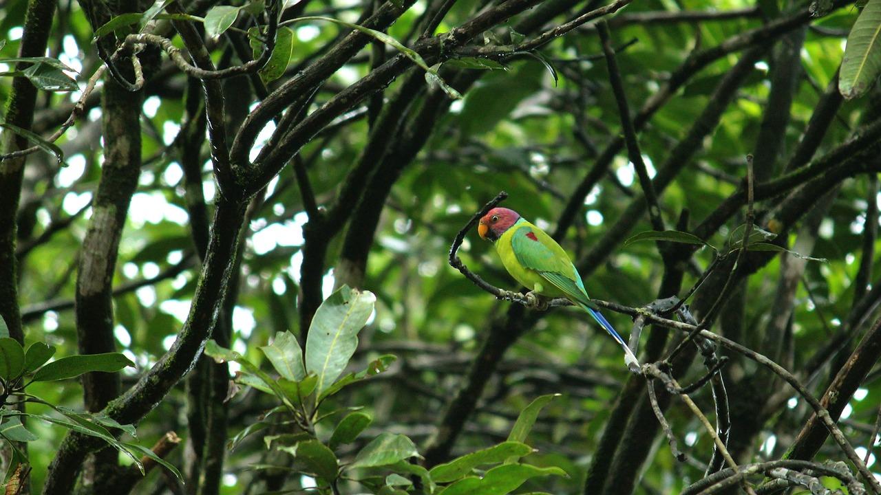 parrot-3546594_1280.jpg