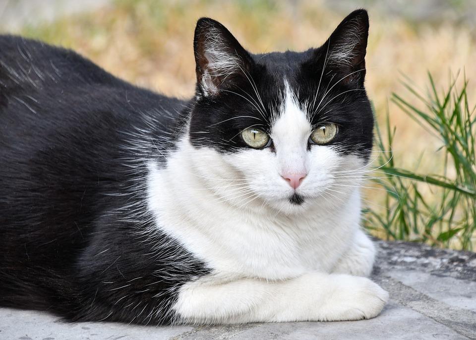 Stiahnuť čierna mačička video