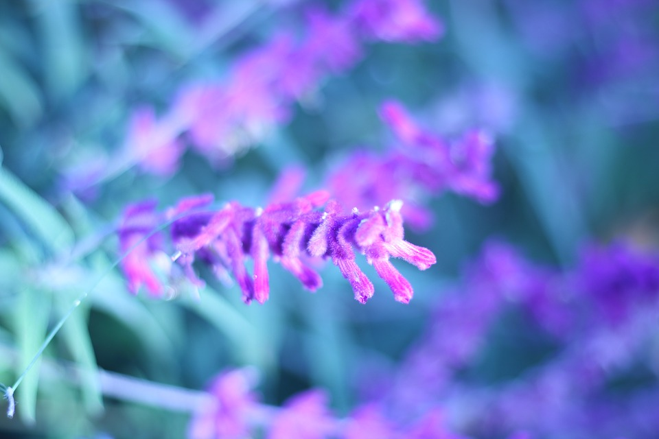 Pretty purple free photo on pixabay pretty purple flower mightylinksfo