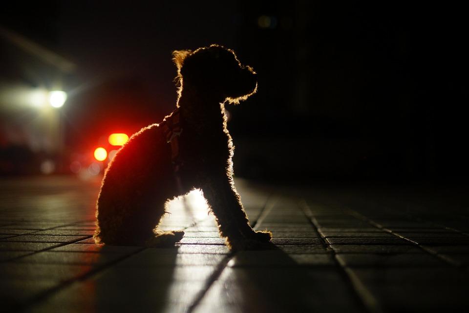 Hond Nacht Uitzicht Licht En - Gratis foto op Pixabay