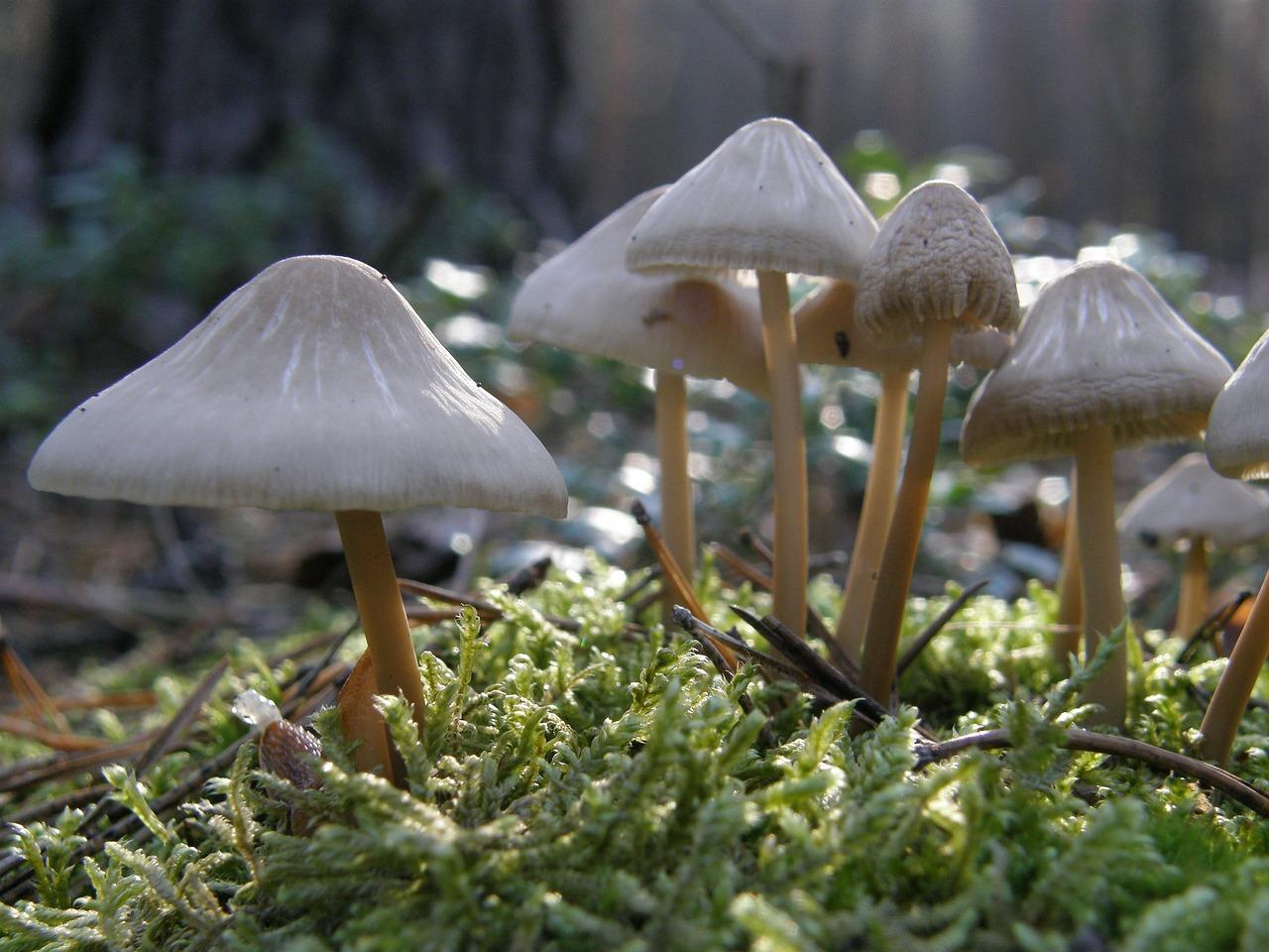 грибы поганки фото с названиями мир