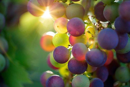 Uva, Sun, Raggio Di Sole, Frutta, Vines