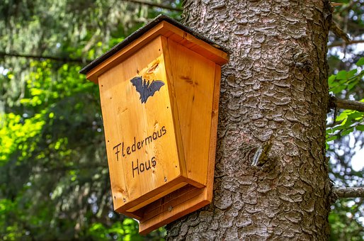 Bat, House, Accommodation, Nature, Home