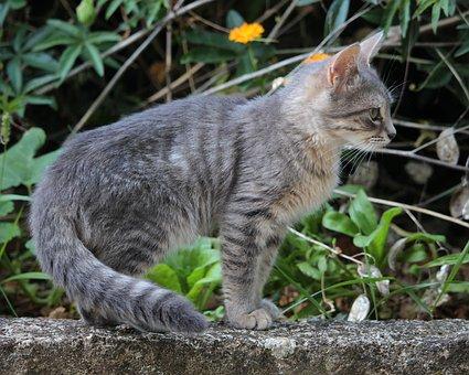 Tier, Katze, Kätzchen, Haustier, Pelz