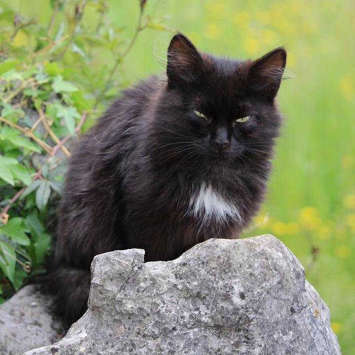 d207d56882c7 Ζώο Γάτα Γατάκι Κατοικίδιο - Δωρεάν φωτογραφία στο Pixabay