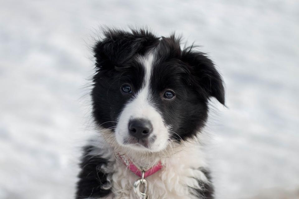 Hund Tier Lustige Kostenloses Foto Auf Pixabay