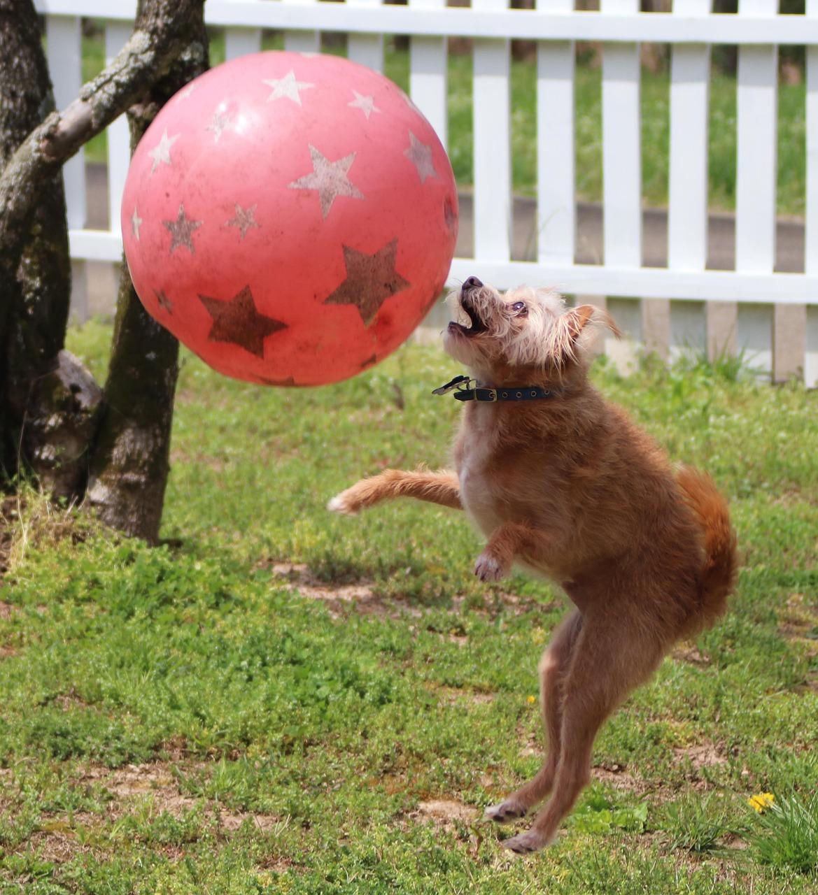 картинки про шарика собаку продаже коттедж