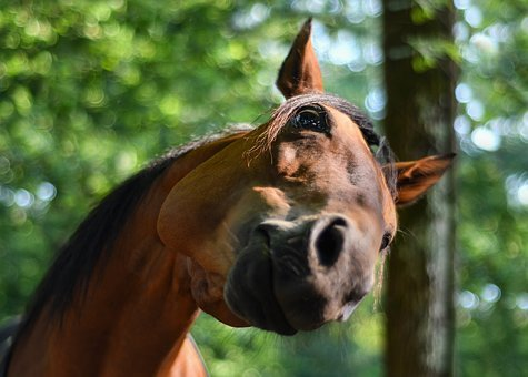 Horse, Funny, Curious, Head, Equine, Fun