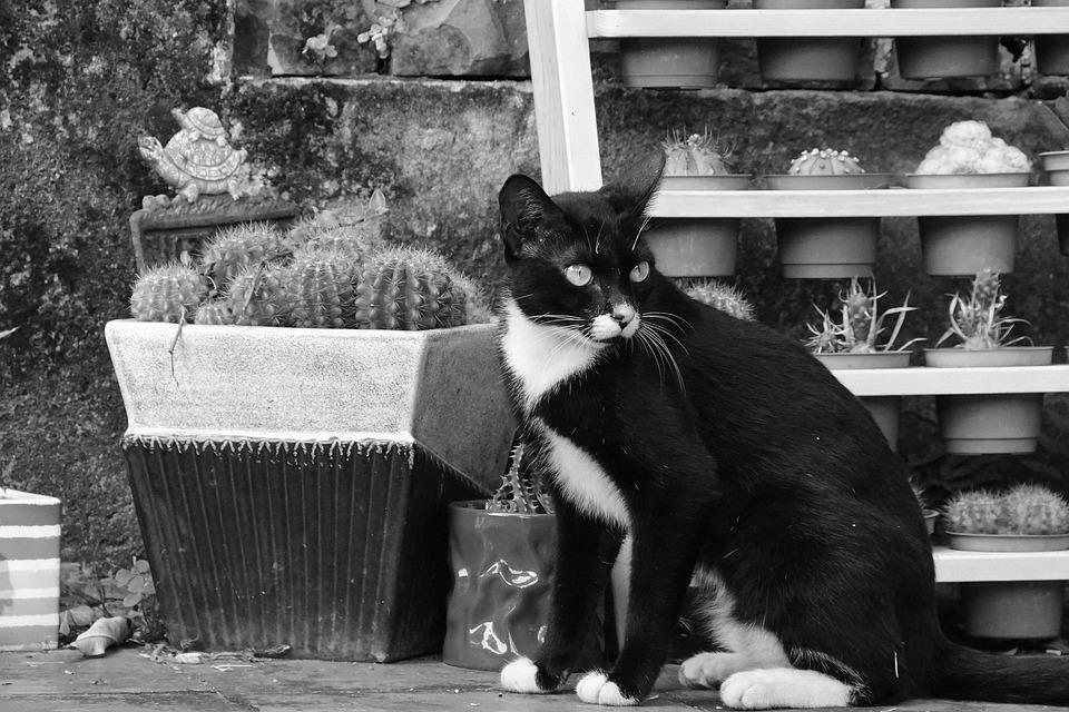 Katze Topfpflanzen Landschaft Kostenloses Foto Auf Pixabay