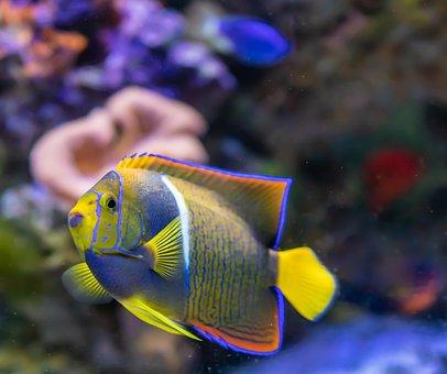 https://cdn.pixabay.com/photo/2018/07/23/07/36/tropical-fish-3556182__340.jpg
