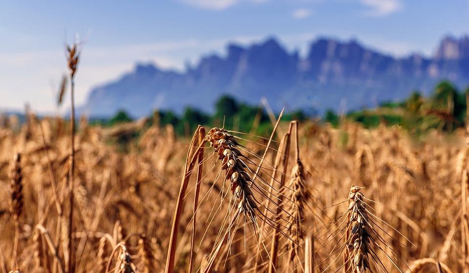 Agriculture été