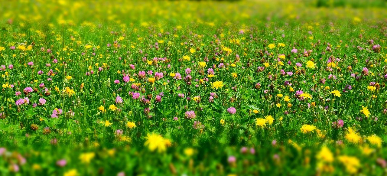 нашем каталоге картинка зеленые цветущие луга основных моментов, который