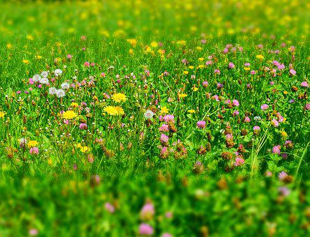 Wild flower meadow images pixabay download free pictures meadow flower meadow wild flowers mightylinksfo